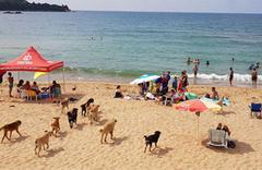 Plajda panik anları: Bir anda sürü halinde geldiler!