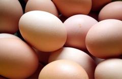 Avrupa'da zehirli yumurta paniği