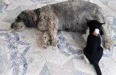 Muğla'da yavru kediyi emziren köpek herkesi şaşkına çevirdi