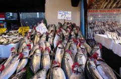 Palamudun tane fiyatı 20 lira oldu!  Balıkçılar hamsiyi bekliyor