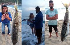 Alanya sahillerinde korkutan canavar! Siyanürden 50 kat daha zehirli