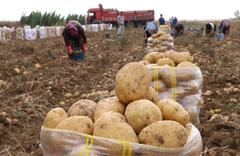 Patatesin kilosu 25 liraya yükseldi! Tarım Bakanı konuştu...