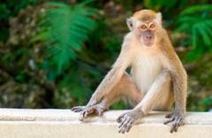 Eve giren maymun bebek çaldı