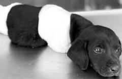 Polisten 'bacakları kesilen köpekle' provokasyon uyarısı