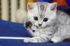 Bursa'da kedi tedavi merkezi açılacak