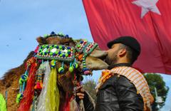 İzmir'de Miss deve seçildi kazanan Baybars oldu