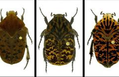 Keşfedilen böceklere Game of Thrones dizisindeki ejderhaların adı verildi