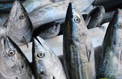 Haliç'te balıkçılara büyük sürpriz
