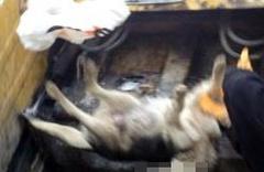 60 köpek zehirlenerek öldürüldü