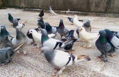 Güvercin uçurma sırası tartışmasında başından vuruldu!