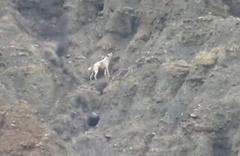 5 gündür kurtarılmayı bekleyen köpeğe Haluk Levent'ten yardım eli