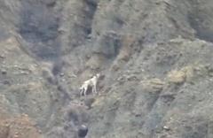 Çankırı'da kanyonda mahsur kalan köpek bulunamadı