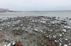 Silivri'de deniz 150 metre çekildi! İstanbul'da ürküten doğa olayı