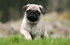 Almanya'da vergi borcu yüzünden köpeklerine haciz geldi
