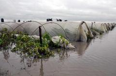 Mersin'de yağışlar seralarda hasara neden oldu