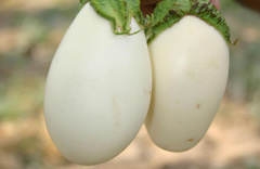 Yumurtada kaç kalori var-yumurta sarısı kalori cetveli 2019