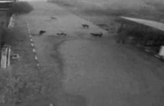 Alkollü kadın barınağı basıp tüm köpekleri serbest bıraktı