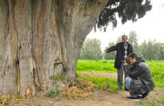 700 yıllık servi ağacını arılar yüzünden yok ettiler! Bursa'da şok olay