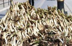 Diyarbakırlıların beklediği bitki pazara girdi günde 250 kilo satılıyor