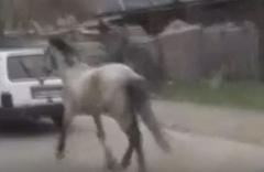 Vicdansız sürücü atını aracının arkasına bağlayıp ana yolda böyle koşturdu