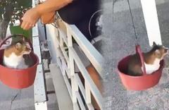 Kediye özel 'sepetli asansör' sosyal medyada gündem oldu