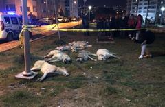 Ankara'yı ayağa kaldıran hayvan katliamı