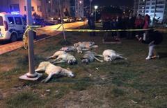 Ankara'daki köpek katliamında istenen cezalar belli oldu
