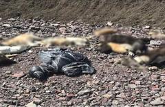 Yine Ankara yine köpek katliamı