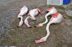 Aksaray'da öldürüldüler!