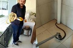 Balkondaki 2 metrelik yılan korkuttu!