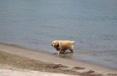 Sıcaktan bunalan sevimli köpeğin deniz keyfi kamerada