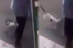 Kedinin saldırdığı belediye başkanına 100 dikiş attılar Yok artık dedirten o anlar