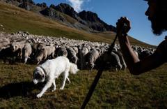 """""""Öğrenci sayısı azaldı"""" diyen yetkililere """"15 koyunu okula kaydederek"""" yanıt verdiler"""