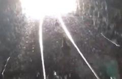 Tünele giren yaban keçileri trenin altında kalmaktan son anda kurtuldu
