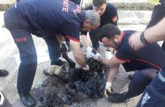 Kocaeli'de bir köpek tankerden dökülen zifte yapıştı