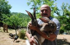 Görenler gözlerine inanamıyor, 4,5 aylık tavşan tam 7 kilo