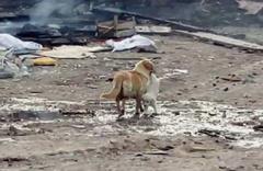 Bilecik'te anne köpek yavrusunu alevlerin arasından kurtardı