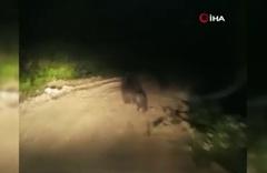 Bartın'da aracın önüne geçen ayı yavrularını böyle korudu