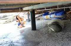 Muğla Bodrum'da beyaz fok balığını şikayet ettiler