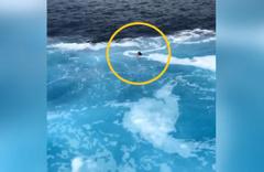 Feribot ile geminin çarpışacağını düşünen kadın suya atladı