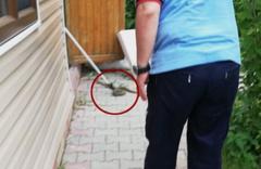 Yağışlardan sonra Ankara'yı yılanlar bastı!