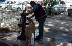 Amasya'da sıcaktan bunalan köpeğe polis şefkati