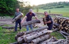 Kastamonuda inanılmaz olay! Ayı orman işçilerini 'rehin' aldı
