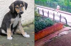Rize'de dereye atılan köpek yavrusunun akıbeti belli oldu
