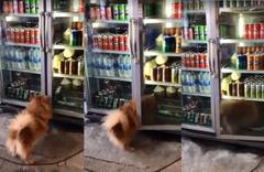 Antalya'da sıcaktan bunalan köpek içecek dolabına girdi