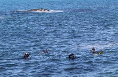 Giresun'da denizde kaybolan öğretmenin cansız bedeni bulundu