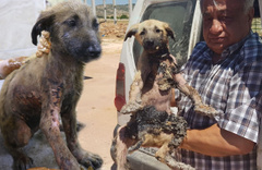 Gaziantep'te yavru köpeğin başına gelmeyen kalmadı