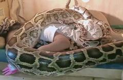 Sosyal medyada olay oldu! Devasa yılanlar Endonezya'da küçük kızın bedenini böyle sardı