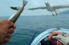 Martı ve yunus balığı her gün denizde onu takip ediyor