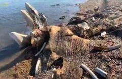 Tatilciler şaşırdı! Deniz kıyısında devasa kemikler bulundu